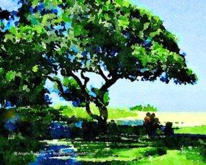Kailua Beach Picnic